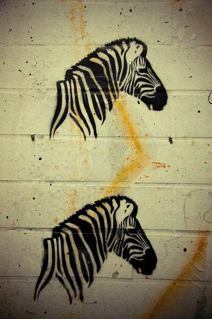 Stency de dos cebras