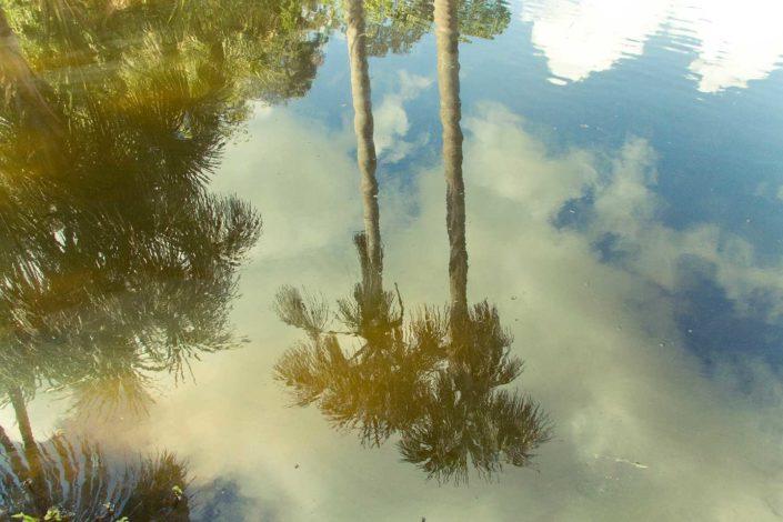 Reflejo de palmeras en el agua