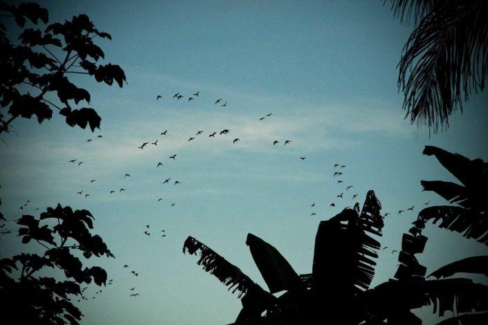 Silueta de palmeras y aves volando