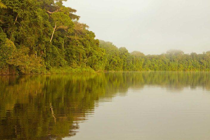 Lago y reflejo de árboles amazónicos