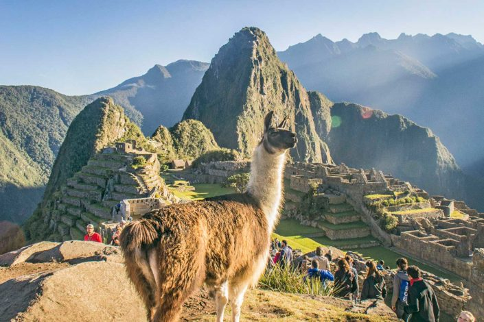 Machu Picchu y llama