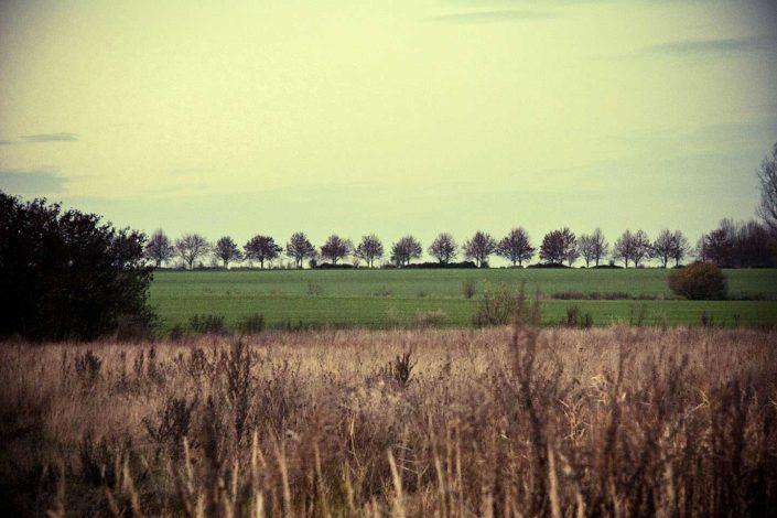 Prado con árboles