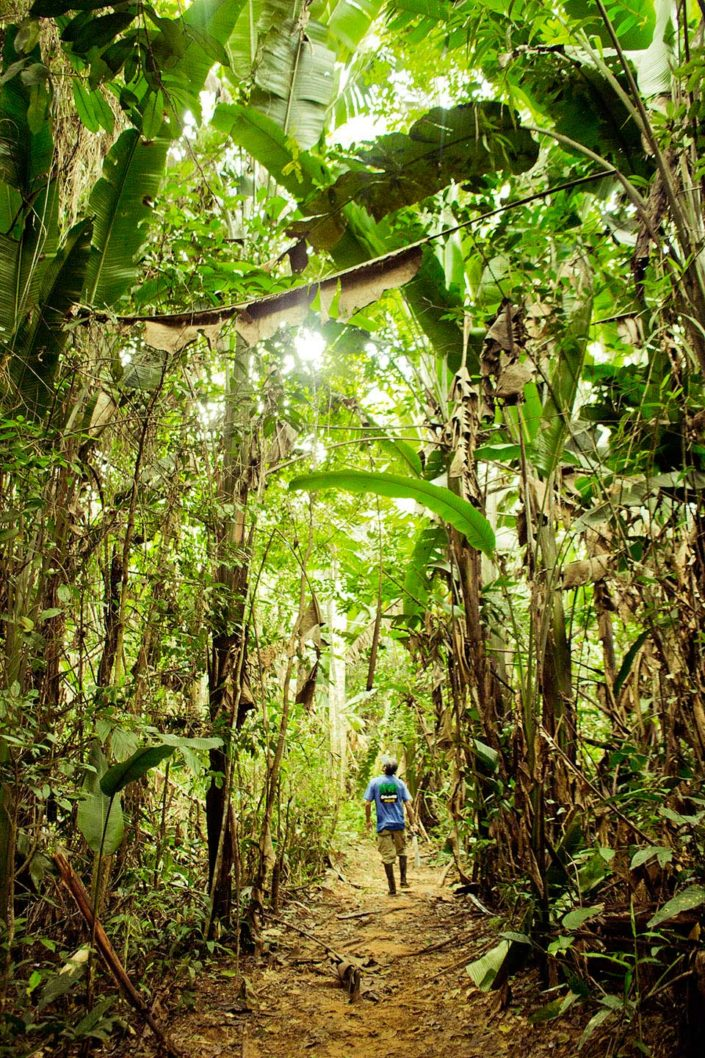 Persona paseando por un bosque de heliconias gigantes