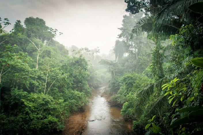 Riachuelo de la selva, niebla